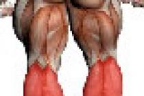 Leggmusklene, en utfordring for de fleste?