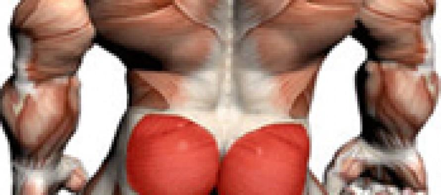 Glute bridge muskler