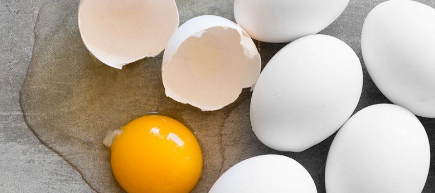 Egg er studentenes hjerneføde