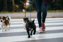 Kom i form med hund!