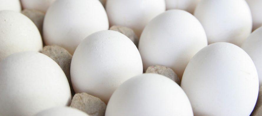 Flytende eggehvite et nytt proteinprodukt med en eksplosiv salgs-start!