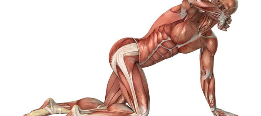 Hva er egentlig muskelaktivering?