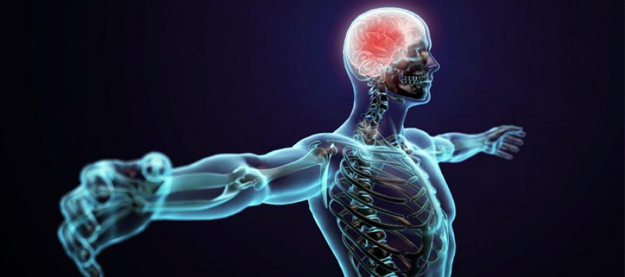 Hormoner – slik blir du påvirket av dem