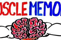 MUSCLE MEMORY: Gjør en rask comeback